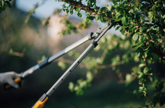 tree pruning service norfolk va